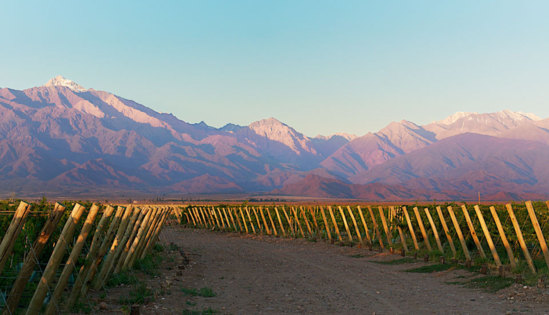 © The Vines of Mendoza